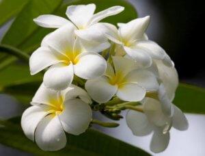 Одно из цветений орхидеи