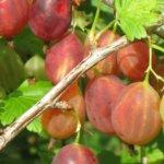 Виды и характеристика кустарных растений: советы садоводов