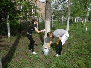 Когда и как нужно белить деревья: правила и рекомендации