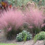 Какие бывают травы и нужно ли их сажать