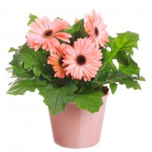 Разновидности цветов и интересные факты о них