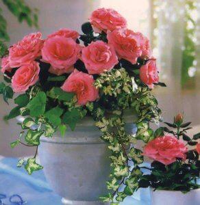 Роза способна украсить любое пространство