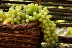 Спелый виноград можно применять в приготовлении пищи