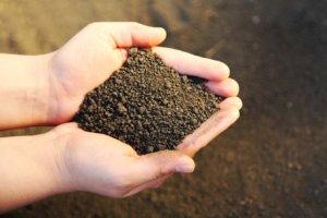 Хороший тип почвы для выращивания овощей и фруктов