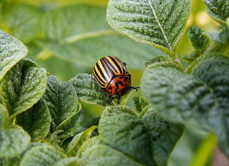 Вредители могут погубить ваши самые любимые растения