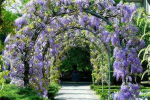 Прекрасный парк из глицинии