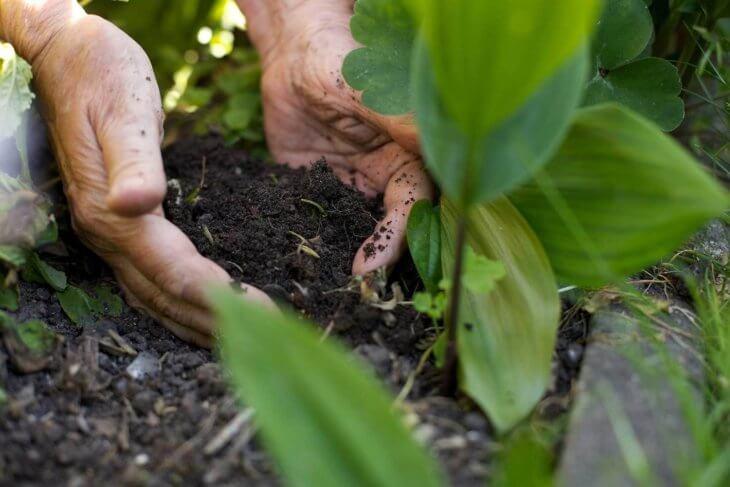 Козий навоз способствует улучшению качества почвы