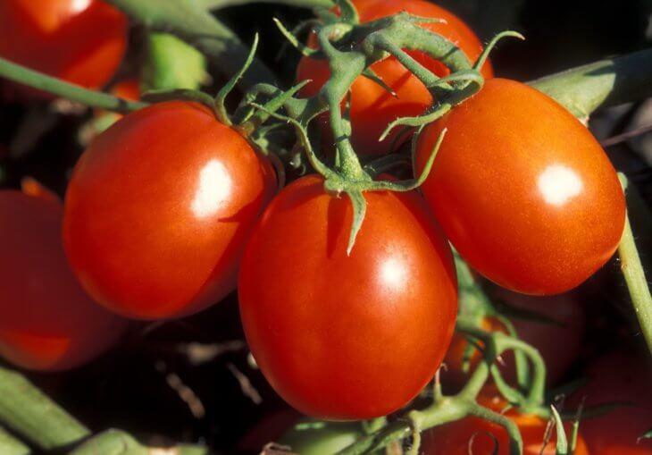 Лат. Solanum lycopersicum