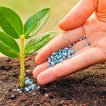 Янтарная кислота как удобрение для комнатных цветов: приготовление раствора