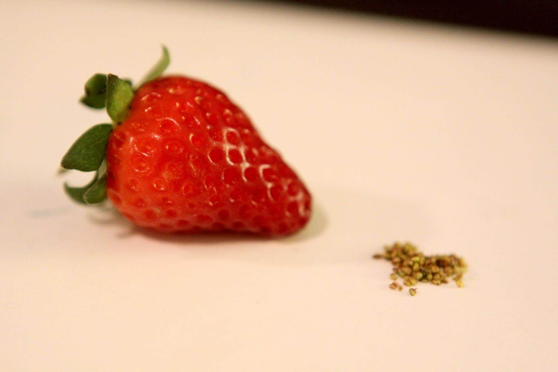 Безусая клубника: как вырастить растение