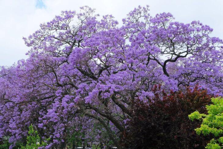 При правильном уходе у вас может вырасти прекрасное дерево
