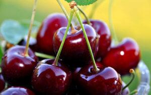 Ранняя черешня Ярославна: описание сорта и особенности выращивания