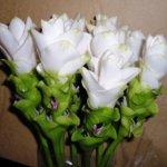Цветок куркума: описание, выращивание в домашних условиях, уход