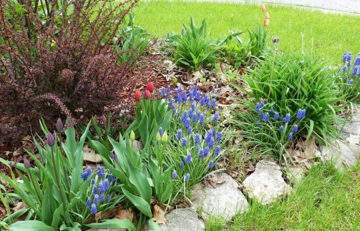 Цветущие растения прекрасно украсят клумбу