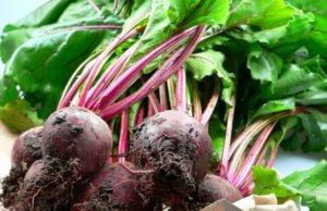 После свеклы можно выращивать на грядке многие овощи