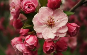 Подкормка цветов йодом: для комнатных цветов, для овощей и ягод