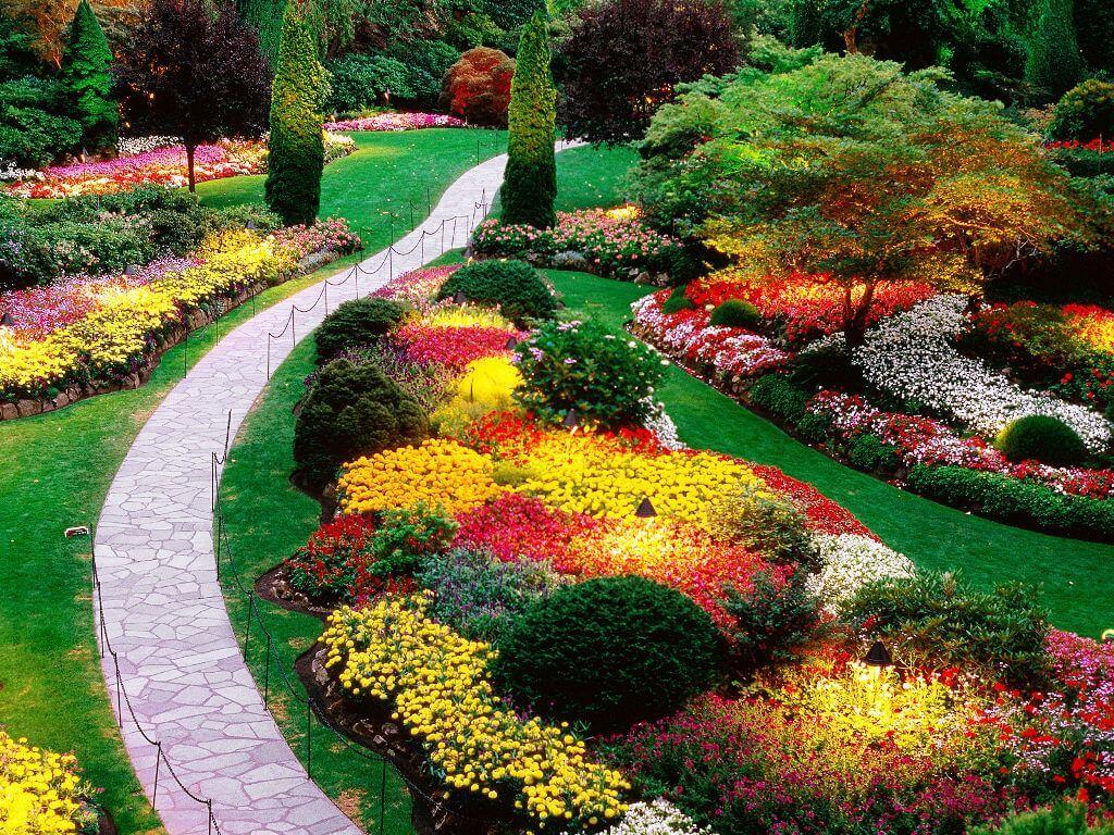 Многолетние растения в саду и на даче: популярные культуры и основной уход