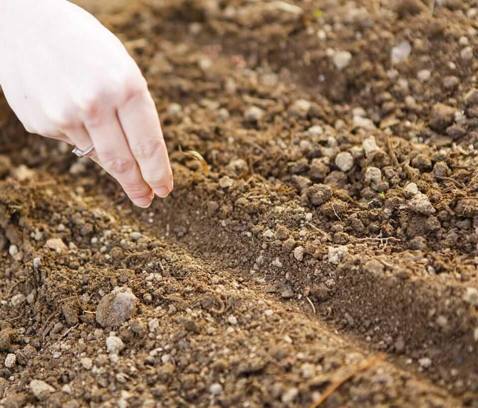 Для прорастания семян необходимы определенные факторы: какие?