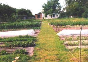 Земледелие в огороде