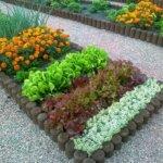 Все о бархатцах: что нужно знать садоводам о растении