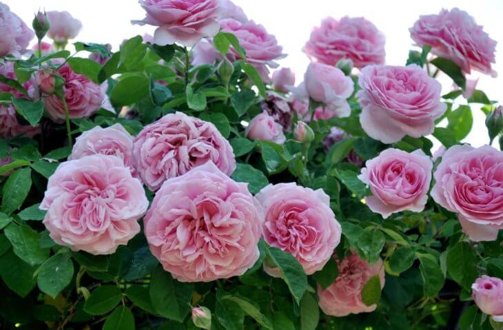 Прекрасное цветение