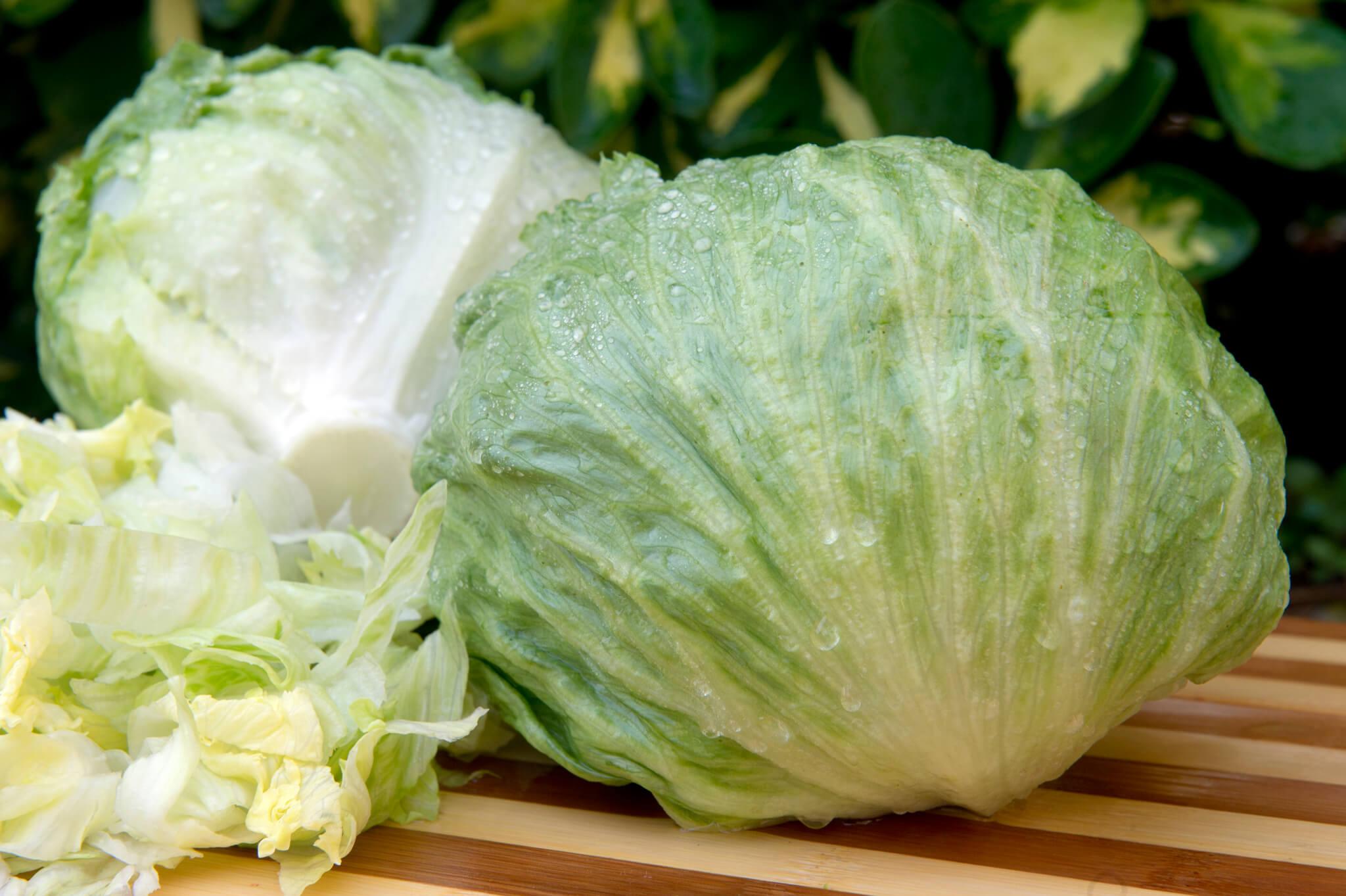 Салат Айсберг: отличительные черты выращивания в теплице, правила ухода