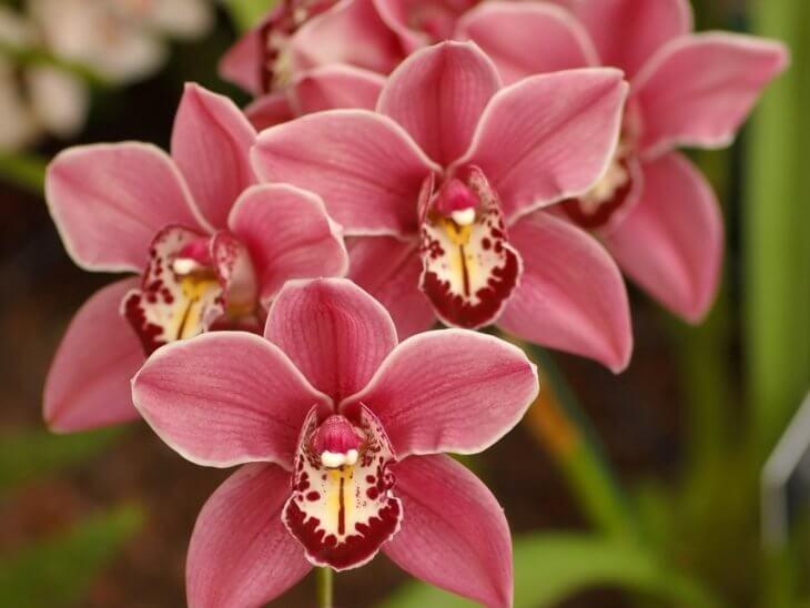 Главное выбрать правильно горшок для орхидеи