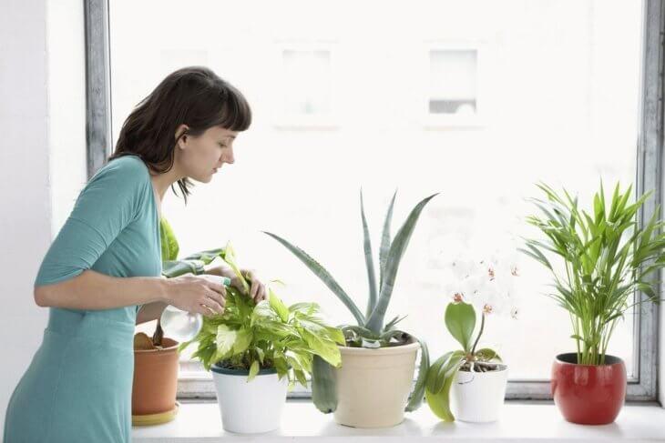 Удобрение растений с помощью перекиси водорода