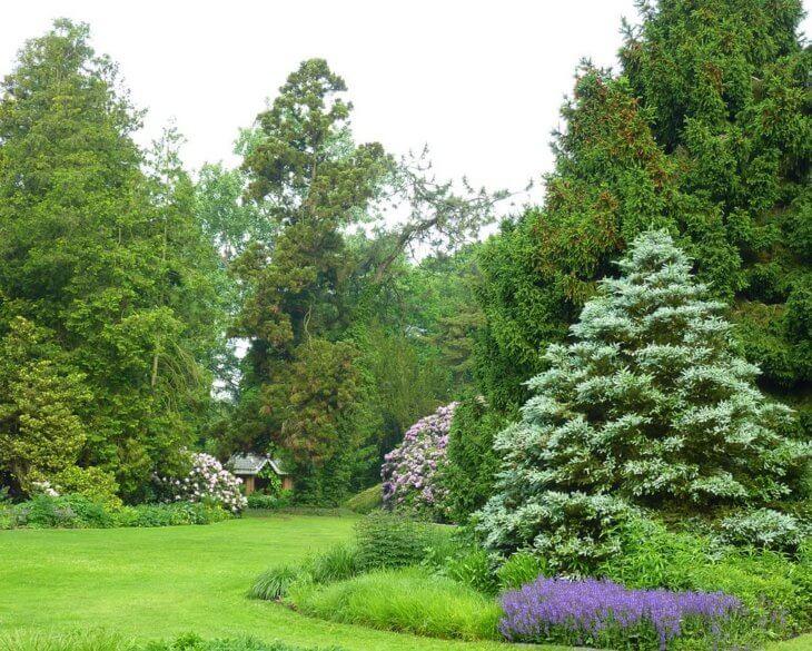 Ландшафтный дизайн с использованием хвойных растений