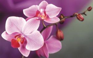 Что делать если у орхидеи сгнили корни: основные методы борьбы
