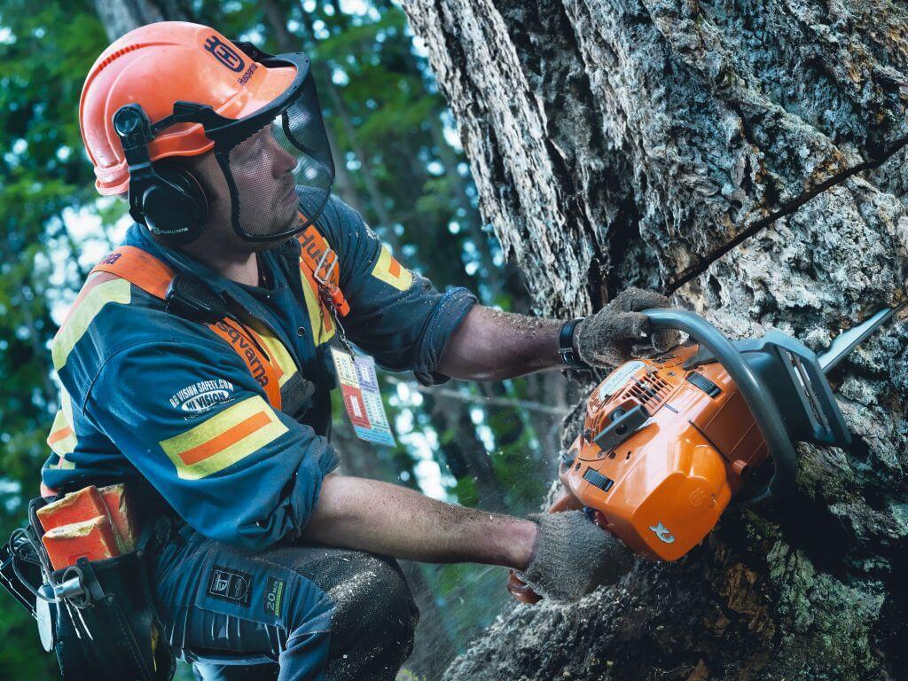 Как правильно пилить деревья бензопилой: основные характеристики