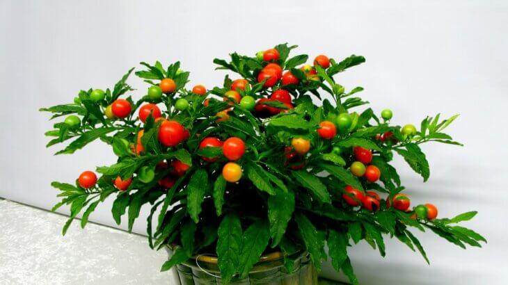 Выращивание растения дома