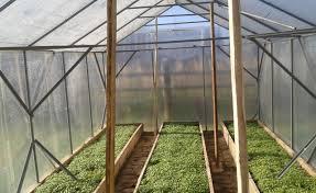 зеленые грядки в теплице