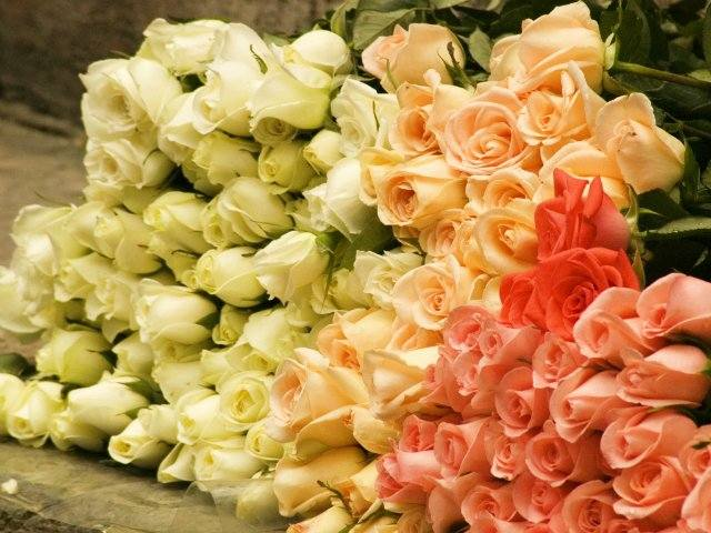 Выращивание розы из черенков подаренного букета