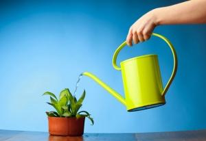 Декоративные комнатные растения, требующие избыточного полива