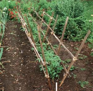 Шпалерный способ подвязывания томатов