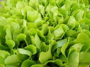 виды салатных