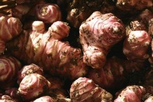 Выращивание Топинамбур