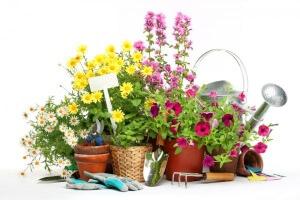 Календарь садовода помогает получить хороший урожай