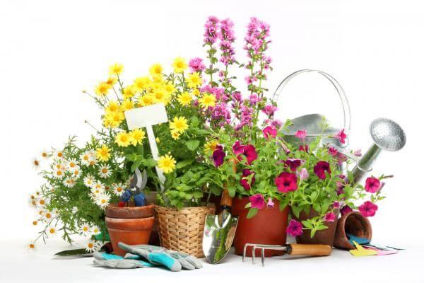 Посадочный календарь для садоводов: выращиваем овощи