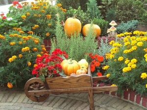 Главное правило для садовода - не высаживать растение в новолуние