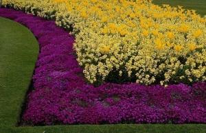 цветы и клумбы