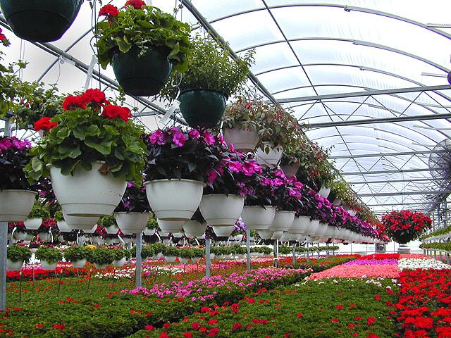 Что выгодно выращивать в теплице весь год: зелень, овощи или цветы