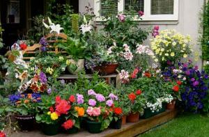 На участок в летний период можно вывозить почти все комнатные растения