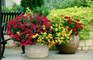 Летом растению удобно на даче