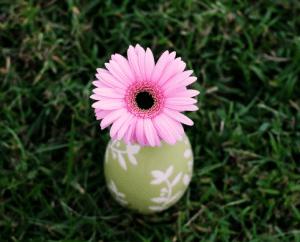 Цветок в срезке долго не теряет своей привлекательности