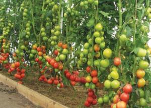 Грамотный подход к почве принесет большие урожаи