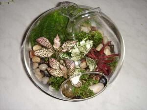 Растения в стеклянной емкости