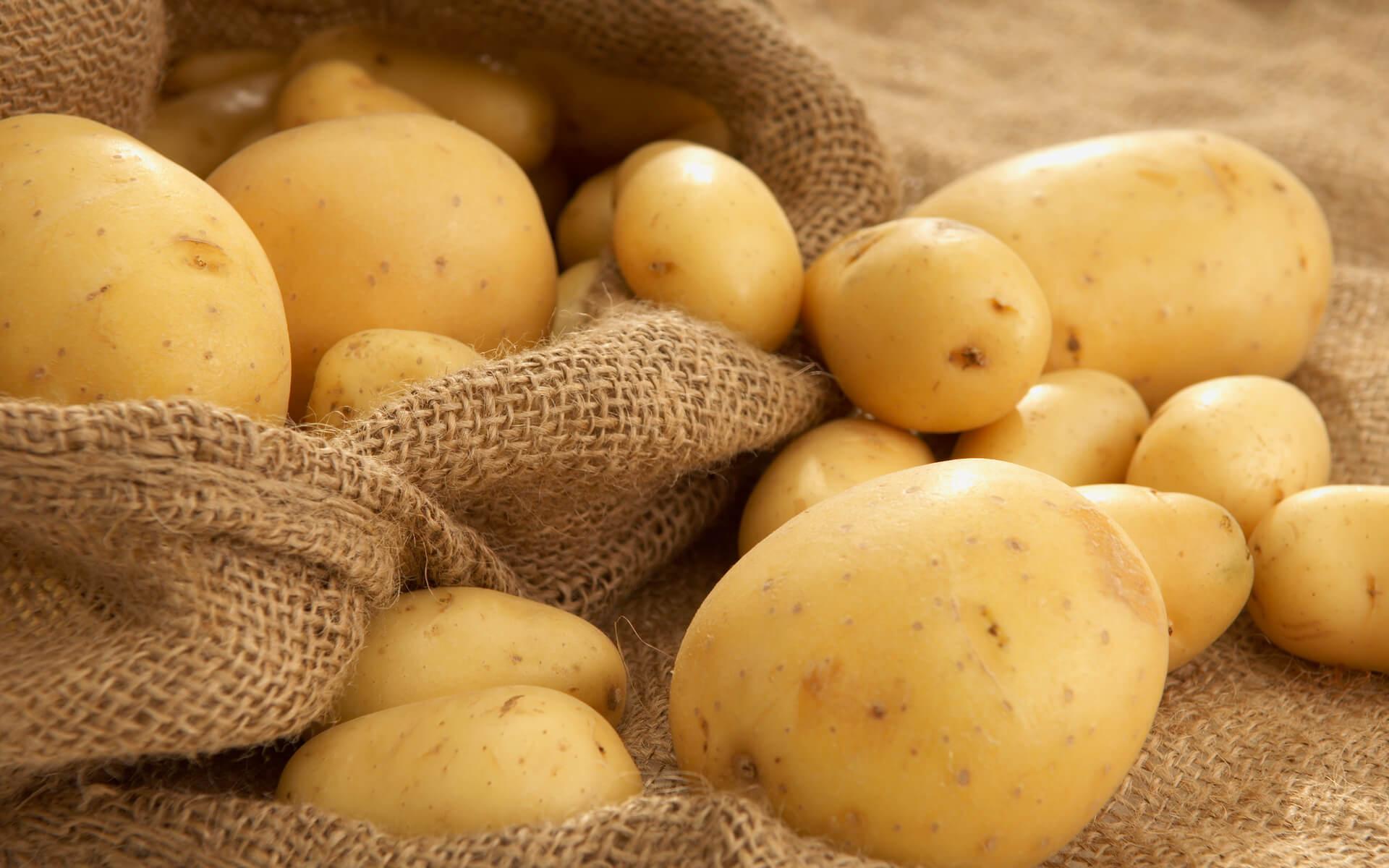Как правильно вырастить картофель — основные нюансы