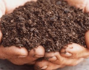 ochen-horoshi-mineralnye-udobreniya-dlya-vinograda